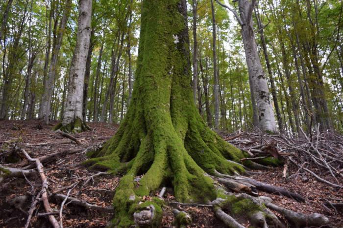 Rapporto PEFC: 881.068 ettari di foreste in Italia sono gestiti in modo sostenibile