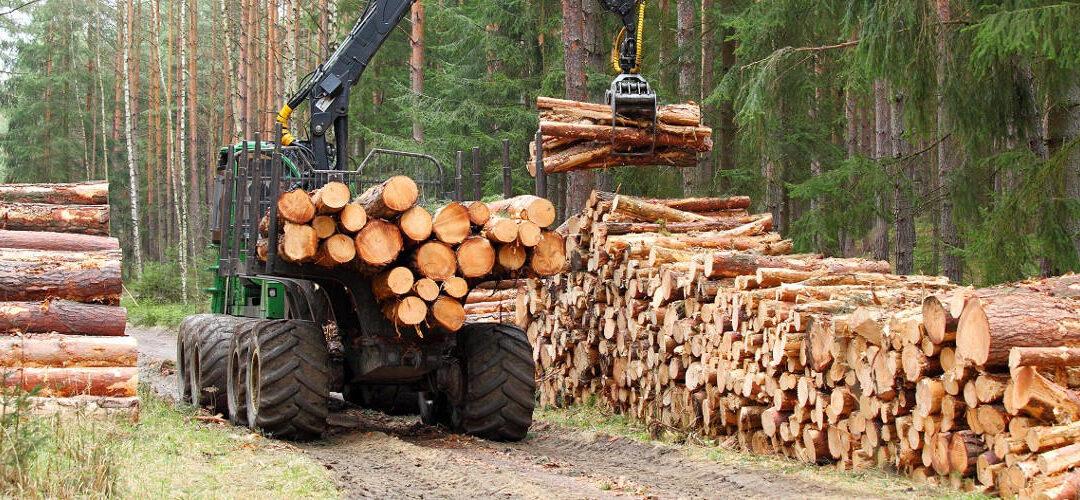 Dal 14 aprile riprendono attività selvicolturali e produzione di biocombustibili legnosi