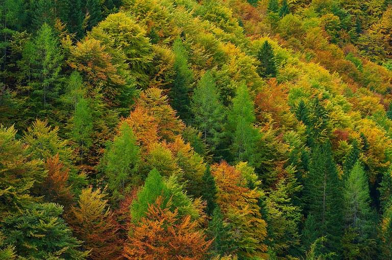 Potere d'intervento ai Sindaci per boschi a rischio