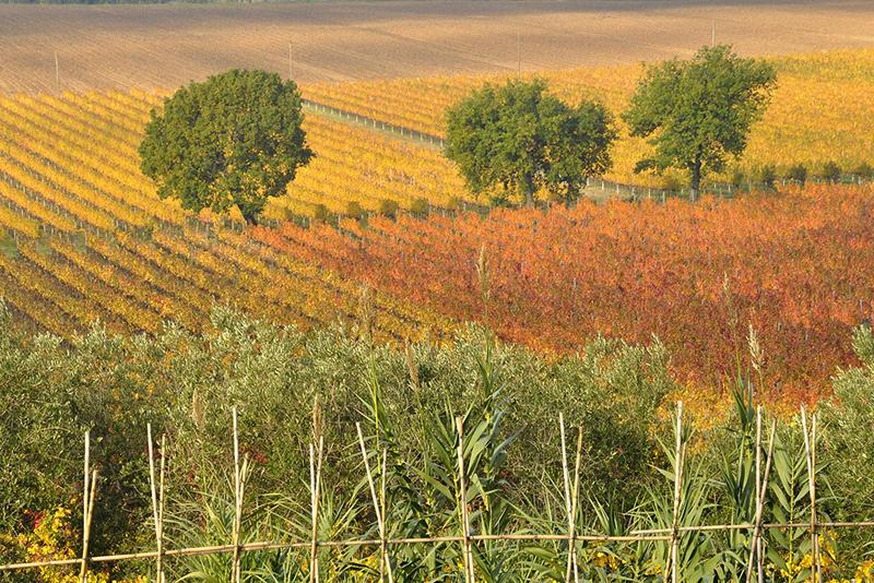 Agronomi e forestali bocciano il piano Colao