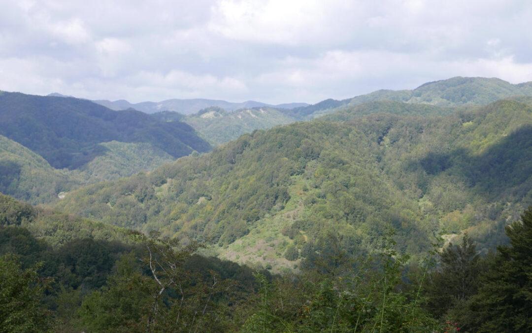Certificazione e fondi pubblici per l'associazionismo forestale