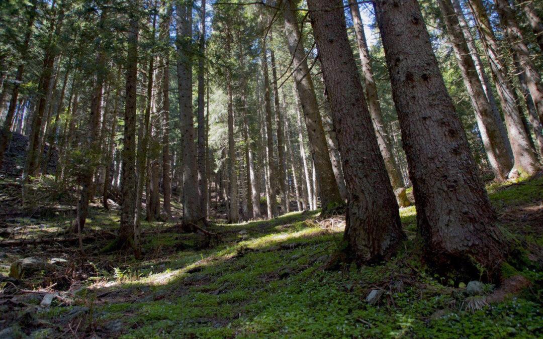 Estate tra i boschi nel post lockdown: il decalogo PEFC Italia per rispettare le aree boschive e ridurre il rischio incendi