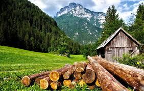 In Fvg la produzione silvicola vale 13 milioni di euro