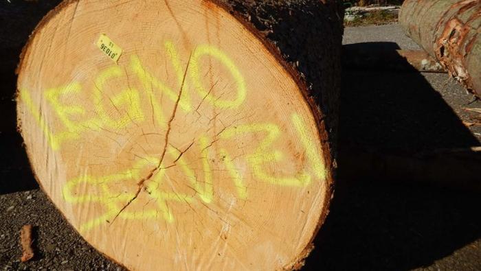 Legno Servizi: fondamentale per l'economia del bosco legno FVG la proroga regionale degli indennizzi per Vaia
