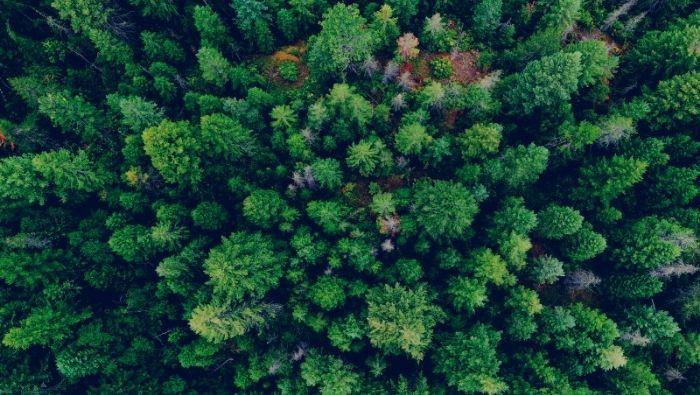 Legno Servizi presenta il suo primo gruppo di certificazione forestale FSC